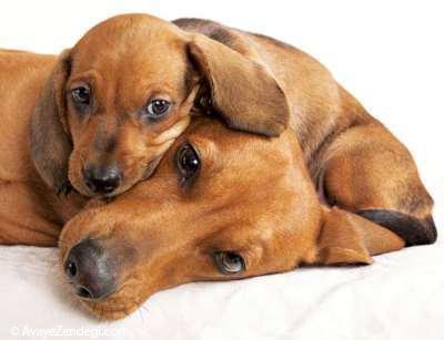 احساس آرامش توله سگ در کنار پدر