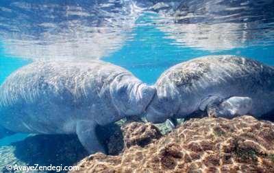 عشق واقعی شیرهای دریایی