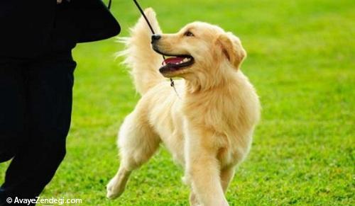 روش صحیح تنبیه سگ و تربیت سگ چیست؟