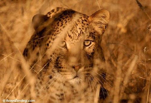 حیوانات خطرناک دنیا