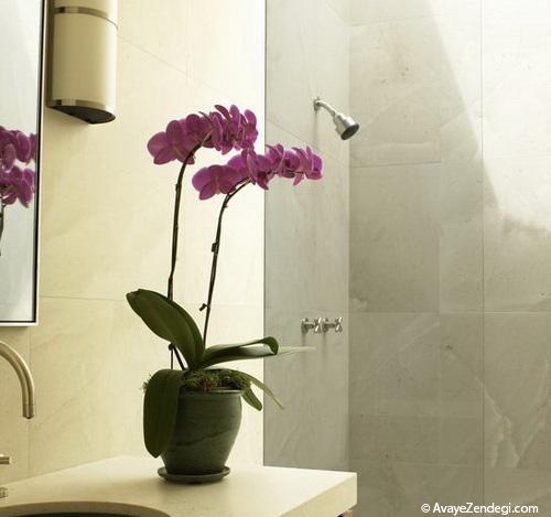 بهترین گیاهانی که میتوانید در خانه خود نگهداری کنید!