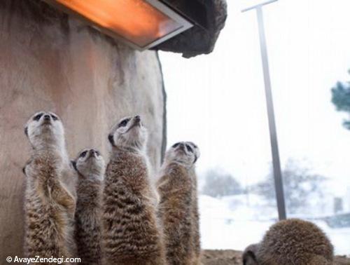 حیوانات در زمستان