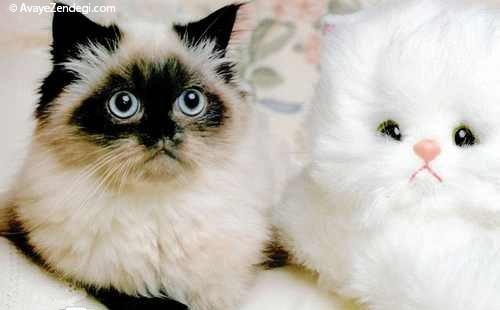 تصاویر جالب و دیدنی از گربه های ملوس
