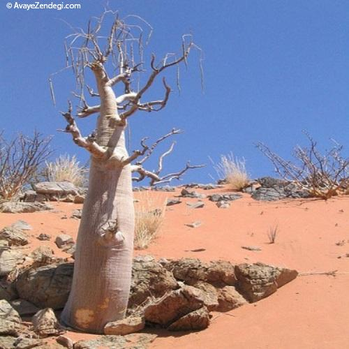 درخت حیات