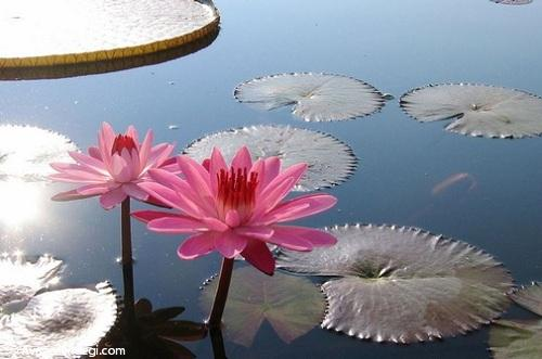 تالاب زیبای کیاکلایه لنگرود