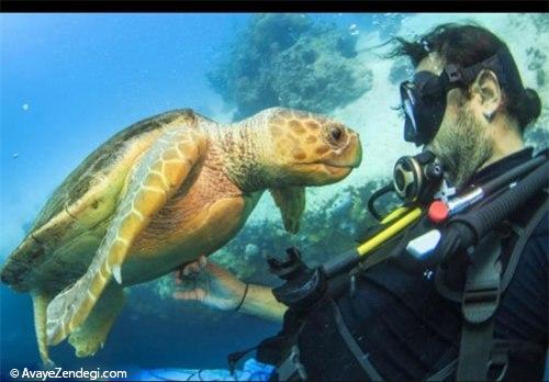 عکس های زیبا از لاک پشت دریایی
