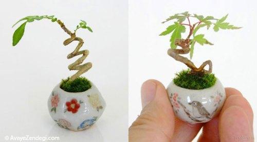 گیاهان مینیاتوری جالب