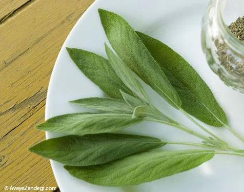 معجزه گیاهان در درمان انواع جوش و آکنه