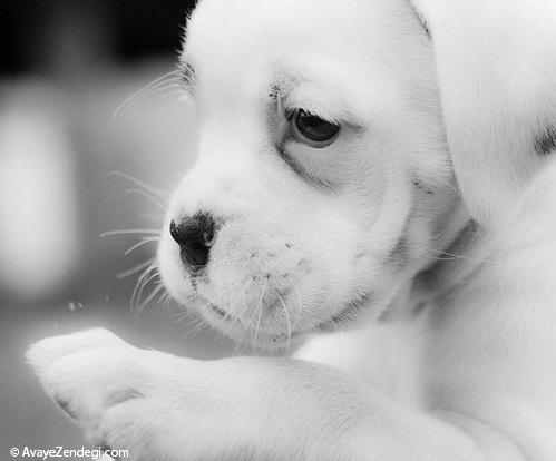 سگ های خوشگل و بامزه