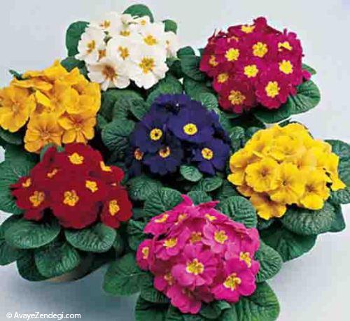 نکاتی مفید برای نگهداری از گلهای بهاری