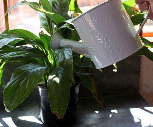 گل و گیاه آپارتمانی و نگهداری از گل های آپارتمانی