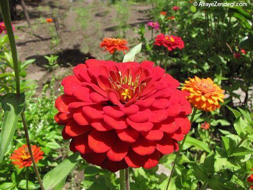 نگاهی به تابستانیترین گلها