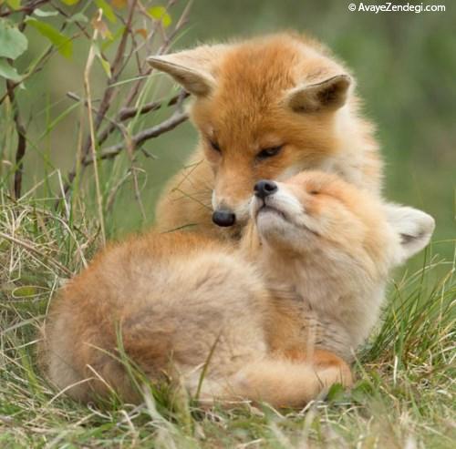 تصاویر دیدنی از حیوانات بامزه