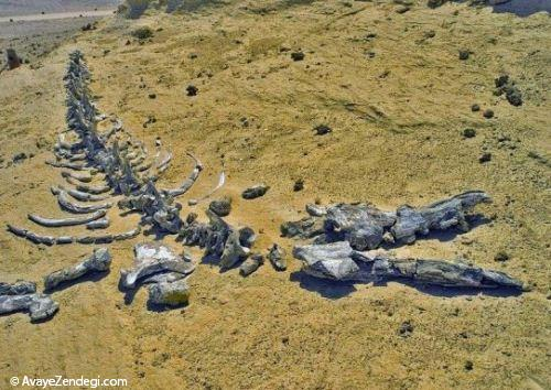 دهکده نهنگ ها در مصر
