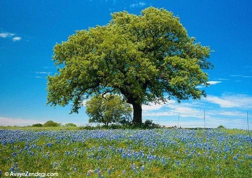 از درختان چه میدانید؟