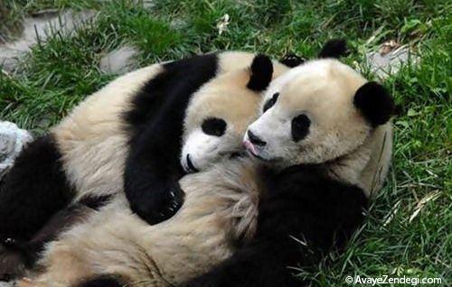 دوستی جالب بین حیوانات