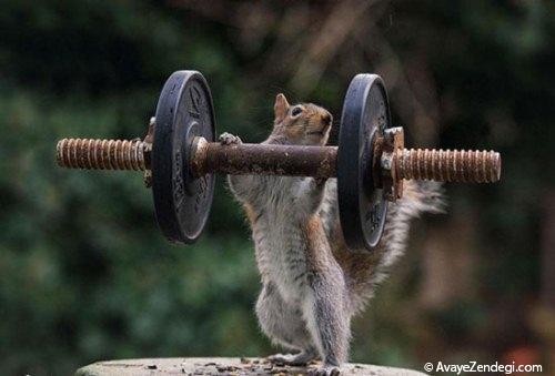 عکس های جالب از کنجکاوی سنجاب