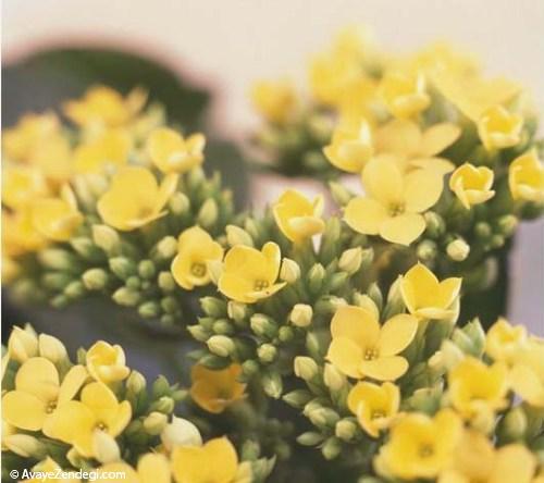 بهترین گل های آپارتمانی برای نگهداری در منزل
