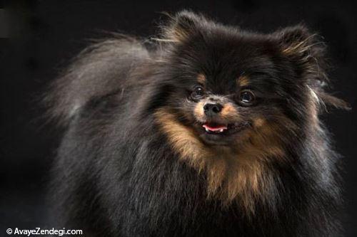 سگ های سیاه