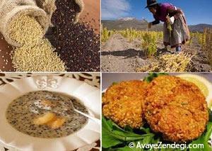 آیا گیاه کینوا را می شناسید؟