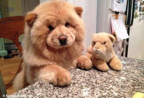 توله سگ های زیبا شبیه خرس