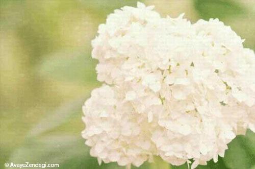 گرانترین گلهای جهان