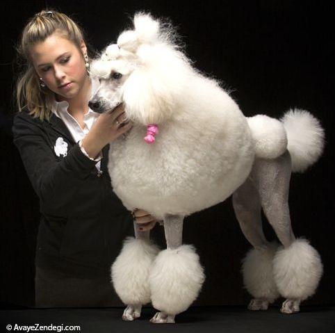 شباهت جالب بین سگ و صاحب سگ