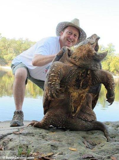 بزرگترین لاکپشت آب های شیرین