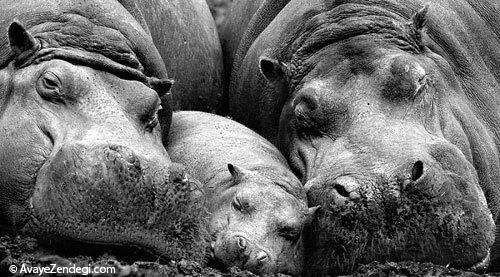 عکس های خانوادگی حیوانات