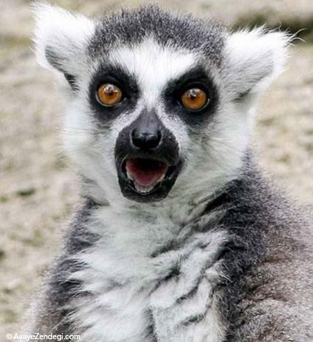 تصاویر بامزه از حیوانات شگفت زده!
