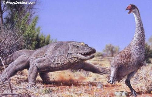 انقراض پرنده بزرگ استرالیایی توسط انسان