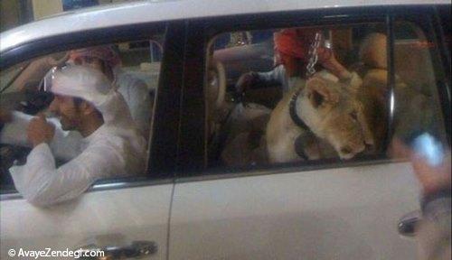 حیوانات خانگی عجیب در امارات!