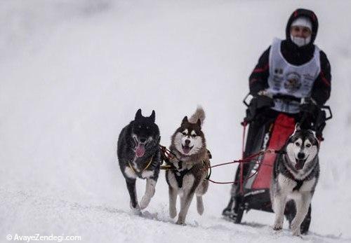 سورتمه رانی سگ در سراسر روسیه