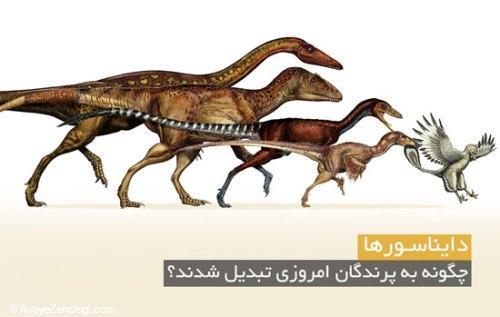 دایناسورها چگونه به پرندگان امروزی تبدیل شدند؟