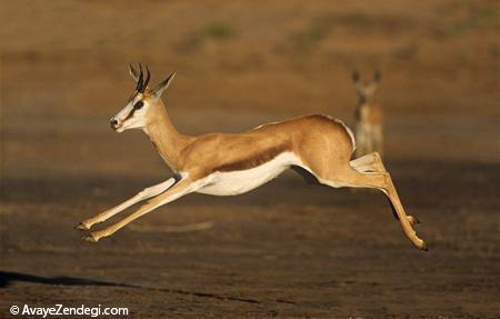 سریعترین جانوران روی زمین را بشناسید!