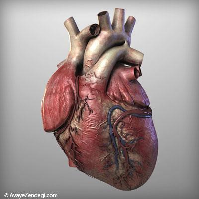 اطلاعاتی جالب و خواندنی درباره قلب