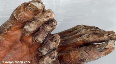 تجزیه بدن انسان پس از مرگ را ببینید!