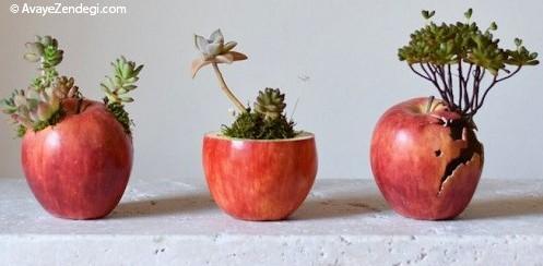 گلدانهای منحصربفرد با مضمون طبیعت