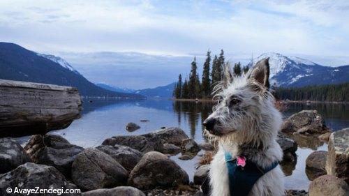 سگ ها چگونه مسیریابی میکنند؟