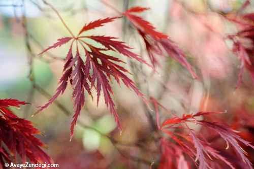 معرفی شش درخت برای باغچه های كوچك شما