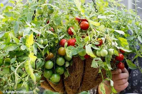 سبد آویز گوجه فرنگی