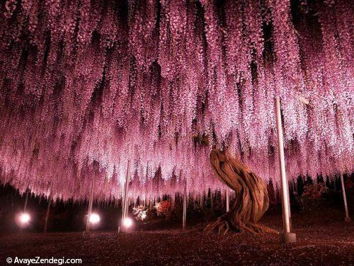 تصاویر درختان زیبا و شگفت انگیز
