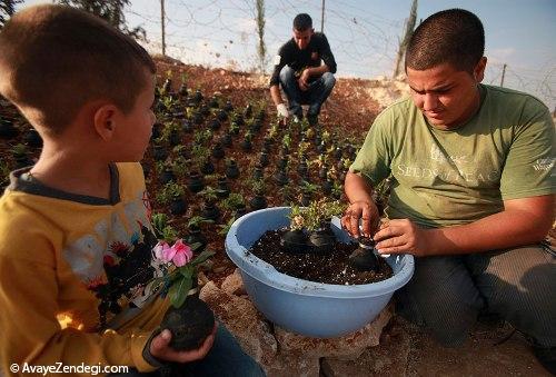 باغی غیر معمول و عجیب در نزدیکی غزه