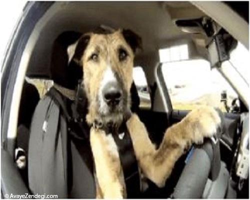 حیوانات خانگی که فکر می کنید آنها آدم هستند!