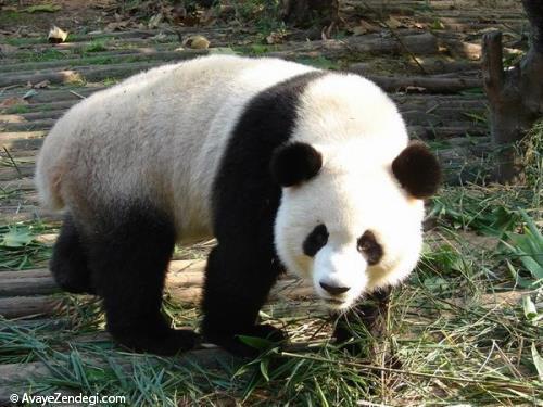70 دانستنی جالب در مورد حیوانات (5)