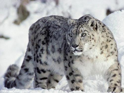 70 دانستنی جالب در مورد حیوانات (6)