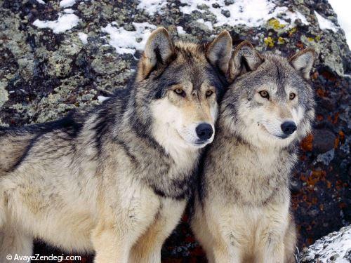 70 دانستنی جالب در مورد حیوانات (7)