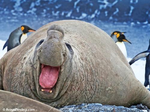 70 دانستنی جالب در مورد حیوانات (9)