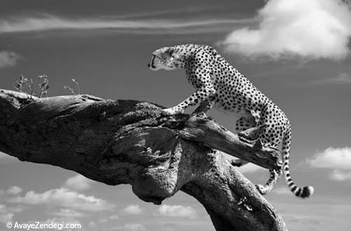 تصاویری از  حیوانات  مختلف در حیات وحش
