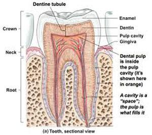 علت درد دندادن